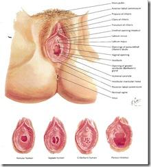 Tipo hay vagina Cuantos de