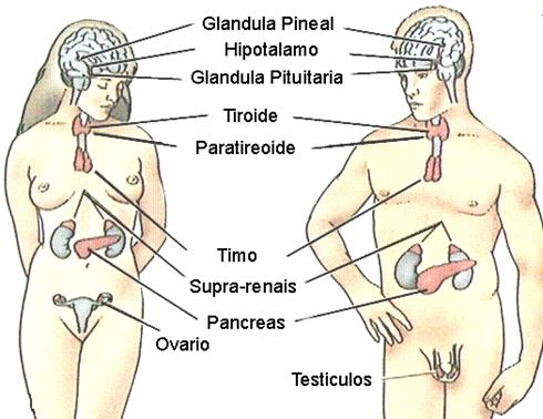 Tecnica quirurgica cesarea