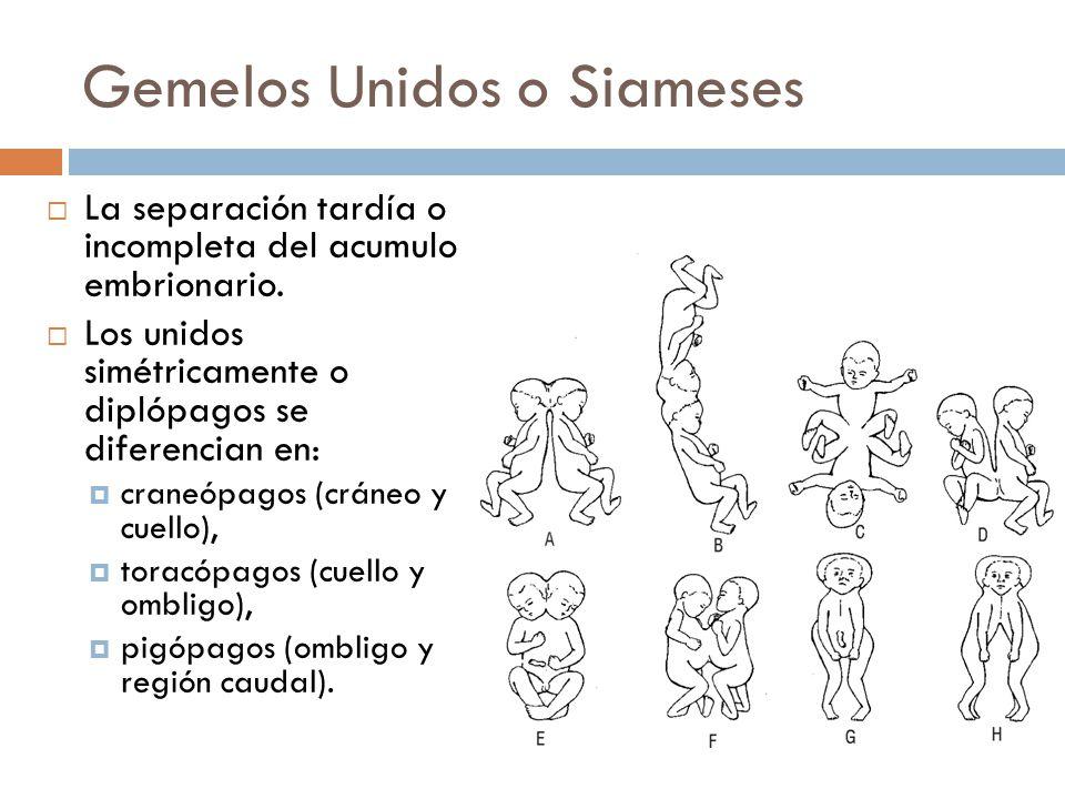 slide_7 | Dr. Rodriguez, Su Ginecólogo Amigo